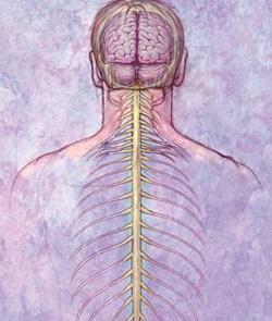 Аномалии развития нервной системы